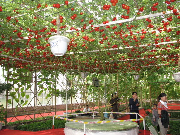 Сад огород интересные идеи