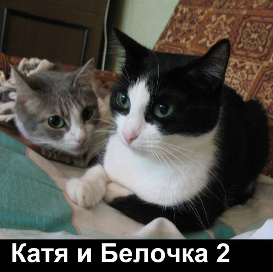 Катя и Белочка