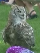 Eva the owl