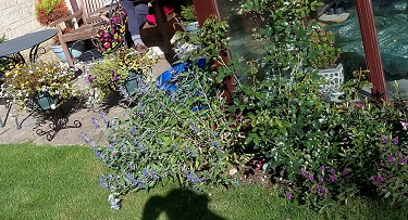 Rob back garden