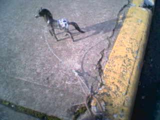 Street horse 1