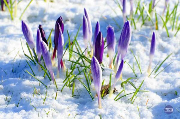 весна-в-Америке-21-марта-3
