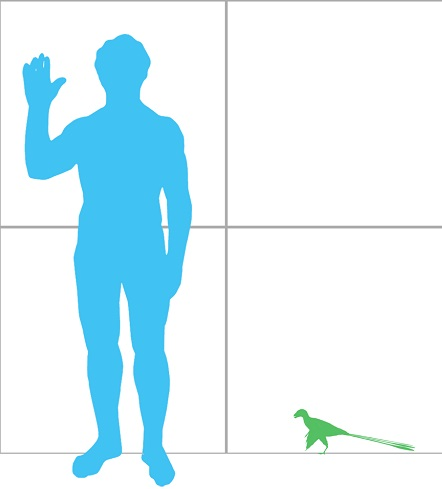 Epidexipteryx_scale