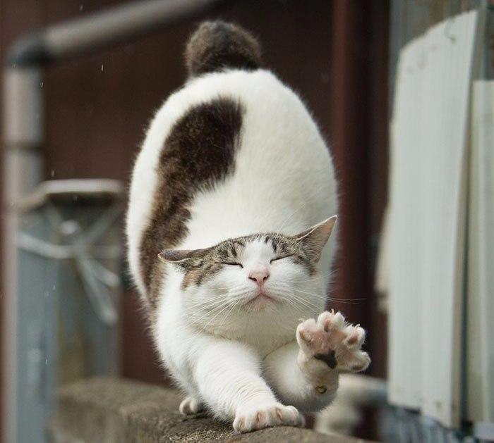 японские коты1