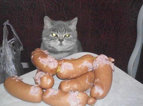 кот и сосиски
