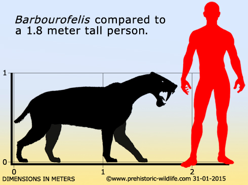 barbourofelis-size