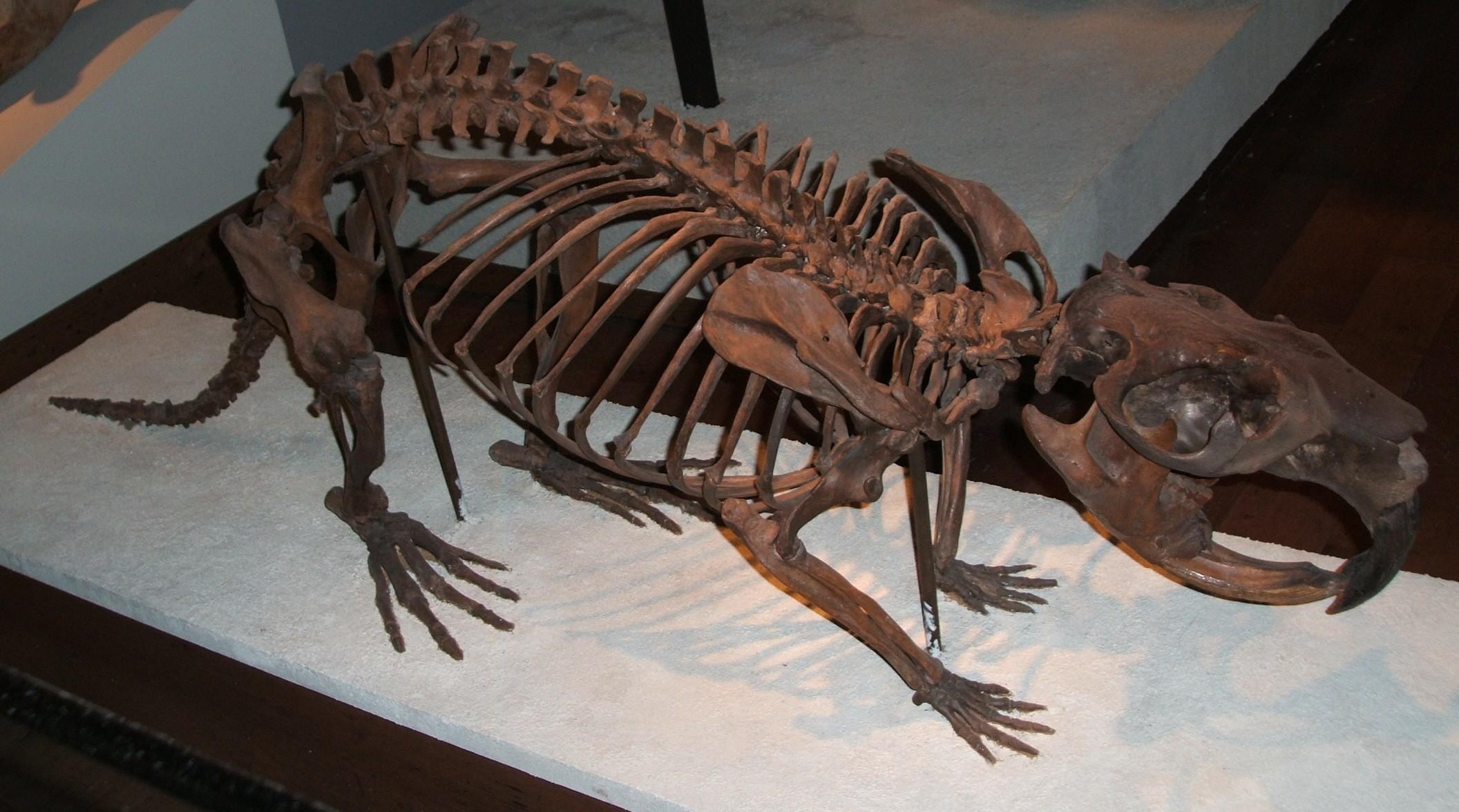 Giant-beaver-fieldmuseum