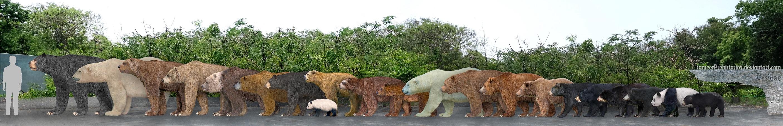 bears_by_sameerprehistorica-d5lkimm