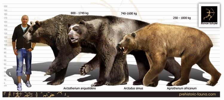 oso de hocico corto