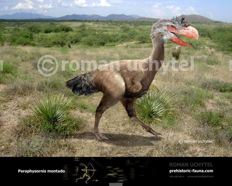Paraphysornis-montado