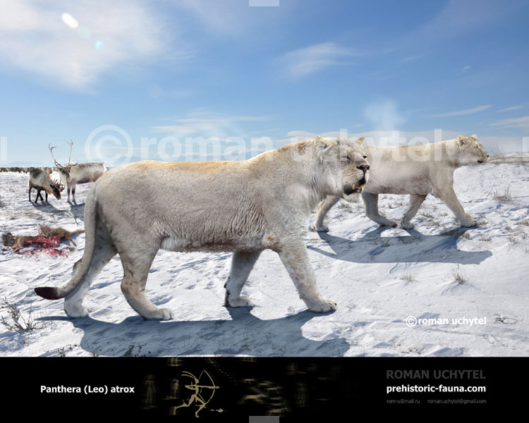 Panthera-Leo-atrox