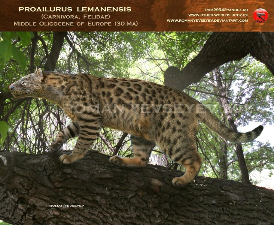 proailurus_lemanensis_by_romanyevseyev-d51wl7r