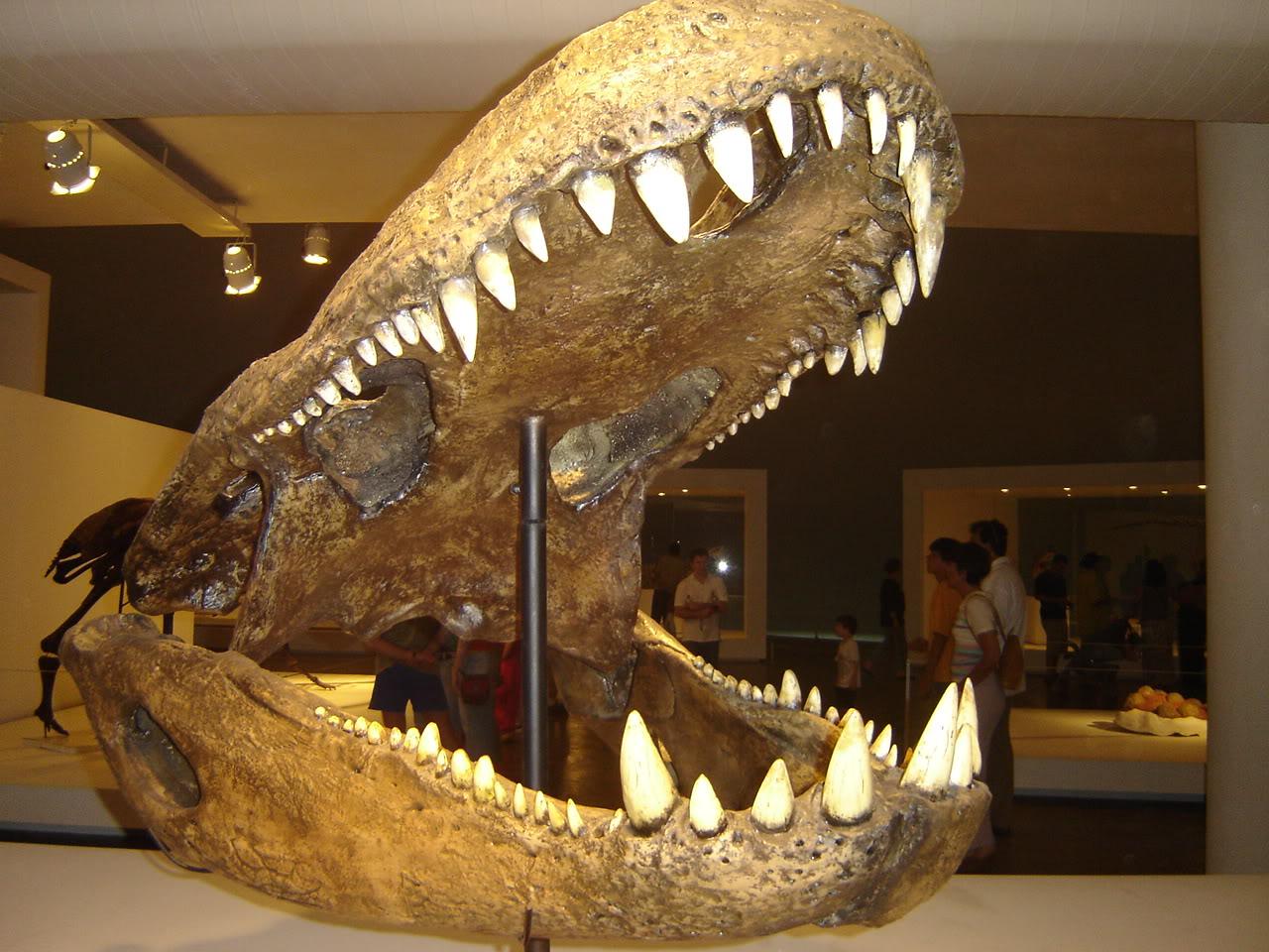 purussaurus-cherep-1