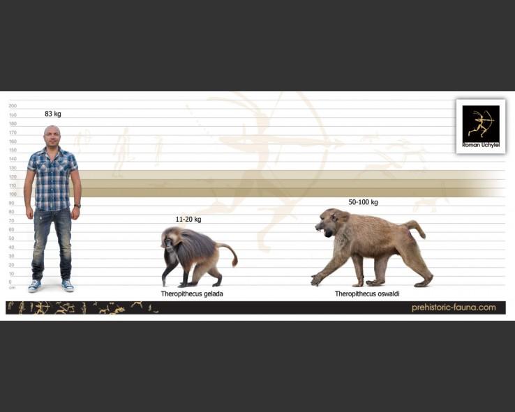 Theropithecus-oswaldi-size-738x591