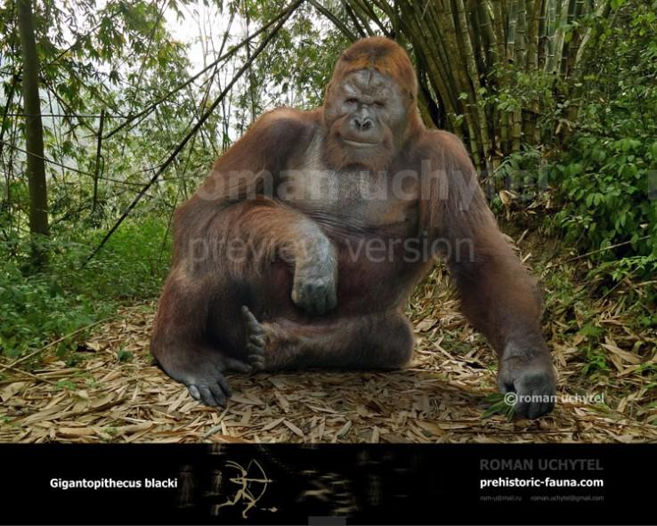 Gigantopithecus-blacki-2017-738x591