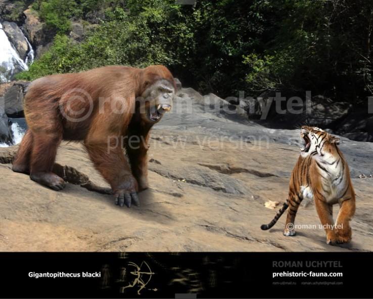 Gigantopithecus-blacki-and-Panthera-tigris-tigris--738x591