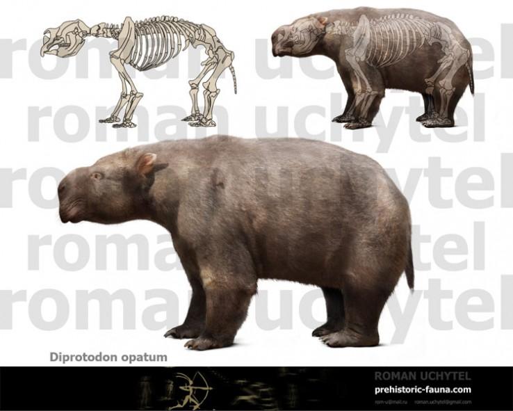Diprotodon-opatum-reconstruction-738x591
