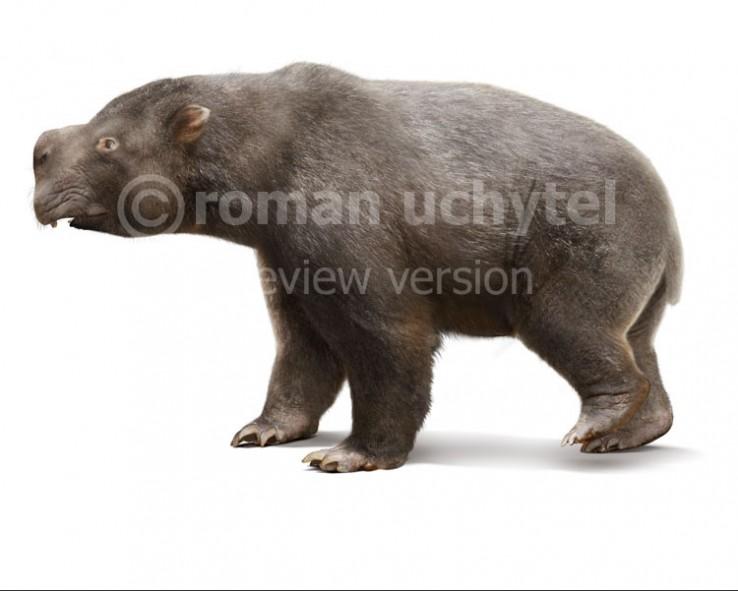 Diprotodon-opatum-white-738x591