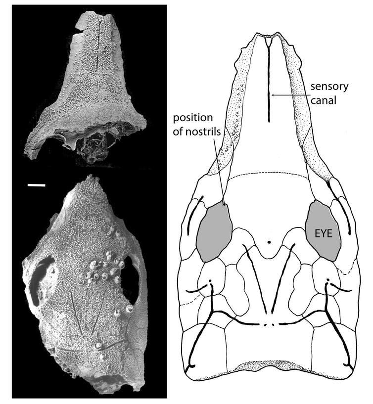 fossilfishwi (1)