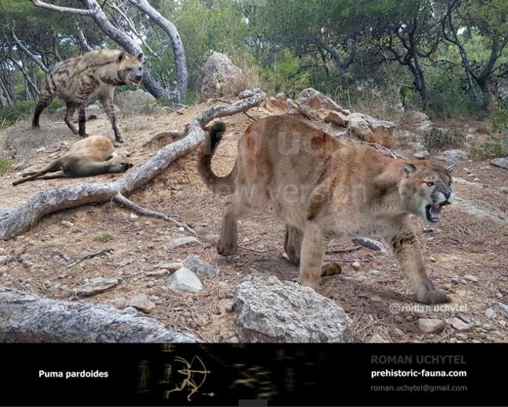 Puma-pardoides-2018-738x591