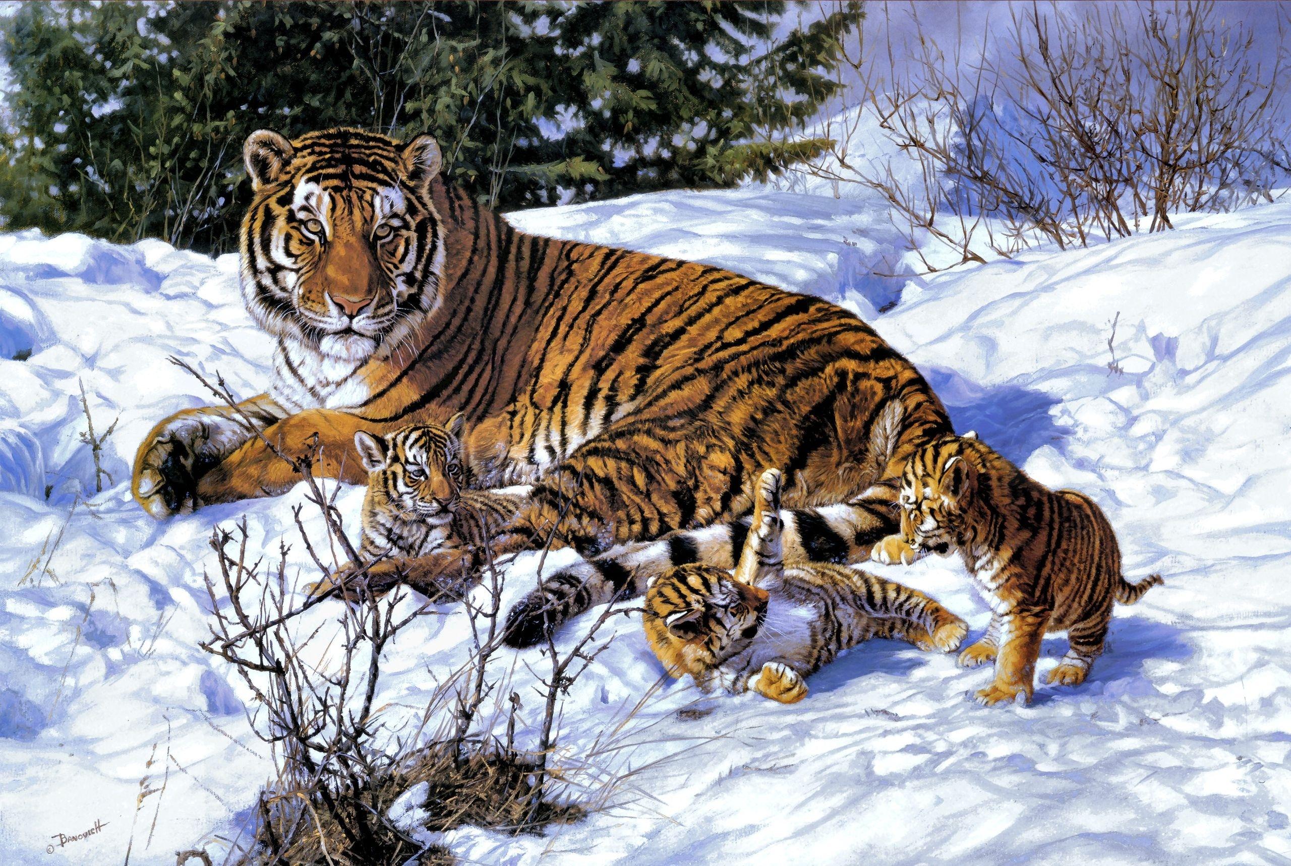 тигр7