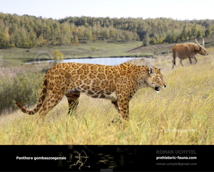 Panthera-gombaszoegensis-(autumn)-738x591