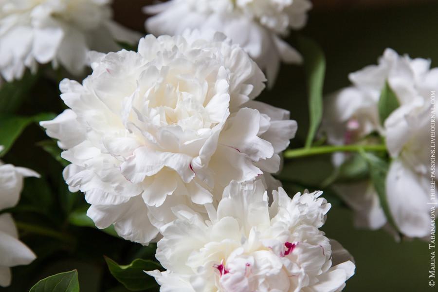 20140529-цветы-004 web