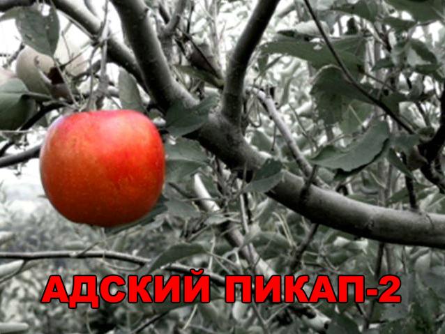 http://ic.pics.livejournal.com/thunderbreaker/10226918/637499/637499_original.jpg