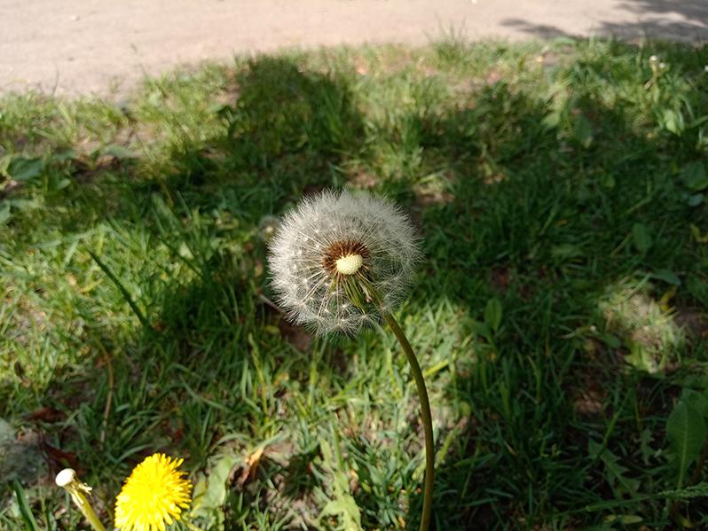 33-Flower-full.jpg