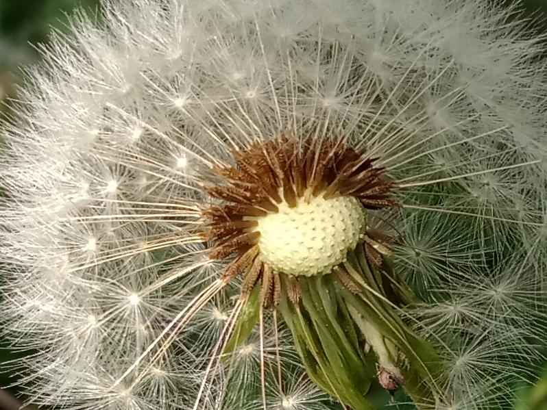 34-Flower-crop.jpg
