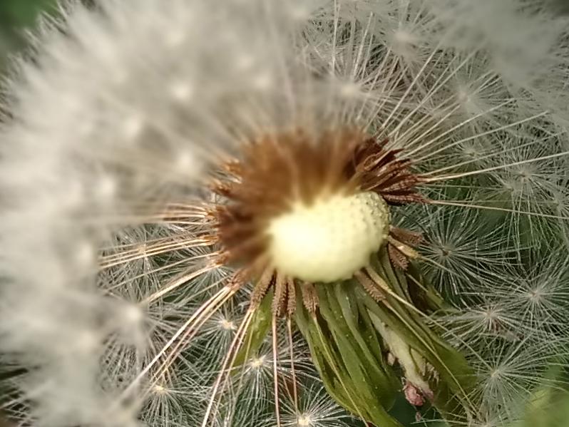 36-Flower-3D-crop.jpg