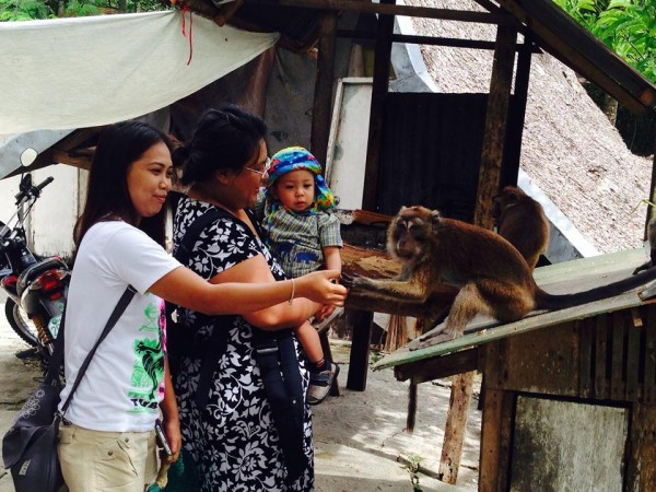 tubigon monkeys may 2014