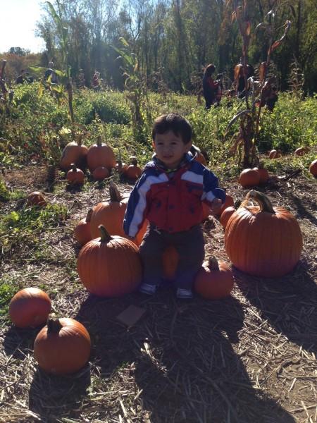 butlers orchard pumpkin