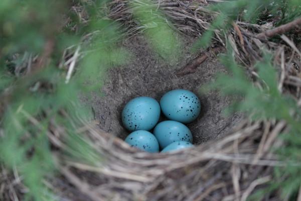 гнездо_новый размер