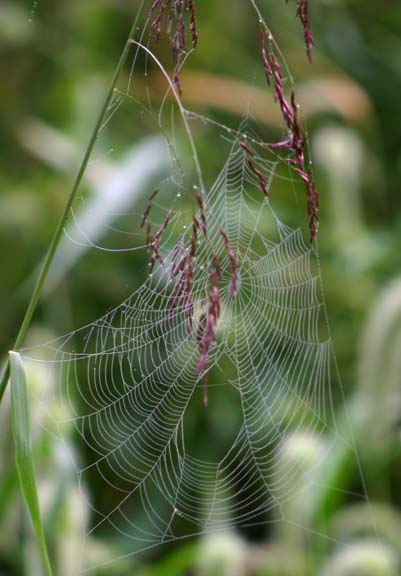 spiderweb on grass