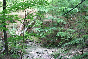 View down into the ravine