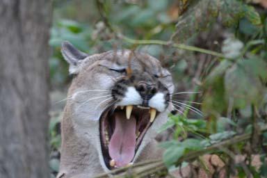 yawn 5