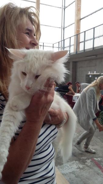 White_cat_4