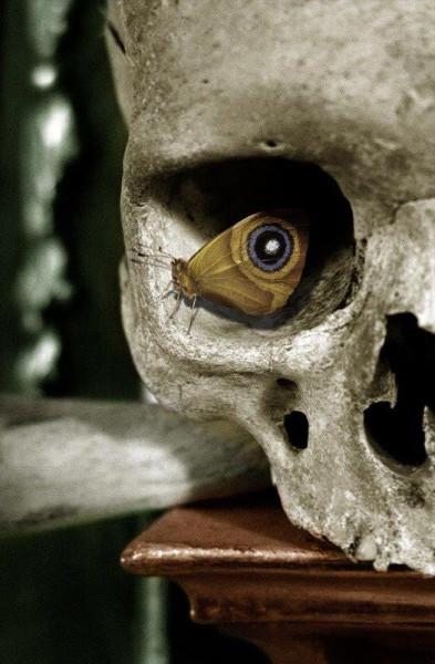 moth skull
