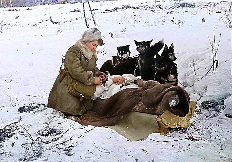 Санинструктор Колесникова Е.Ф. эвакуирует с поля боя на собачьей упряжке раненого бойца. Волховский фронт. Фото 1943 года.jpg