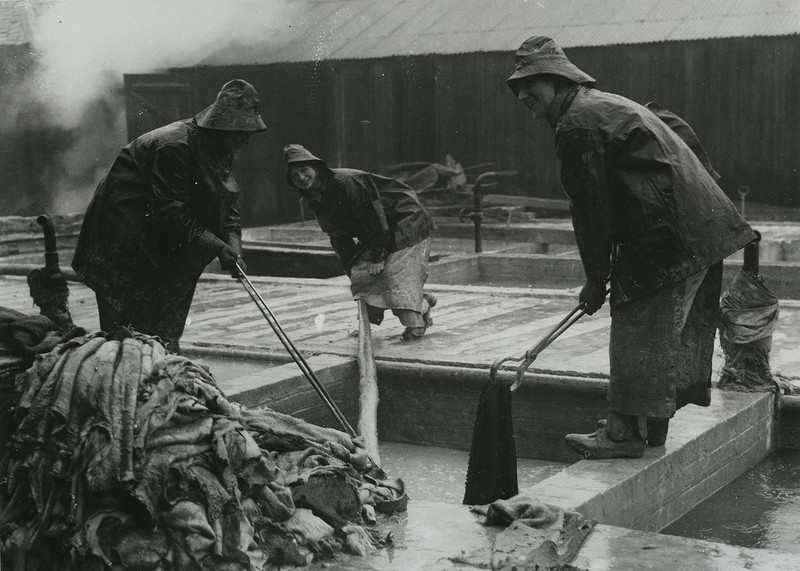 British women in Nottingham tannery drawing skins from the lime pit