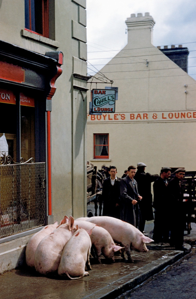 IRELAND. County Kerry. Killorglin. 1954. Puck Fair. Inge Morath.jpg