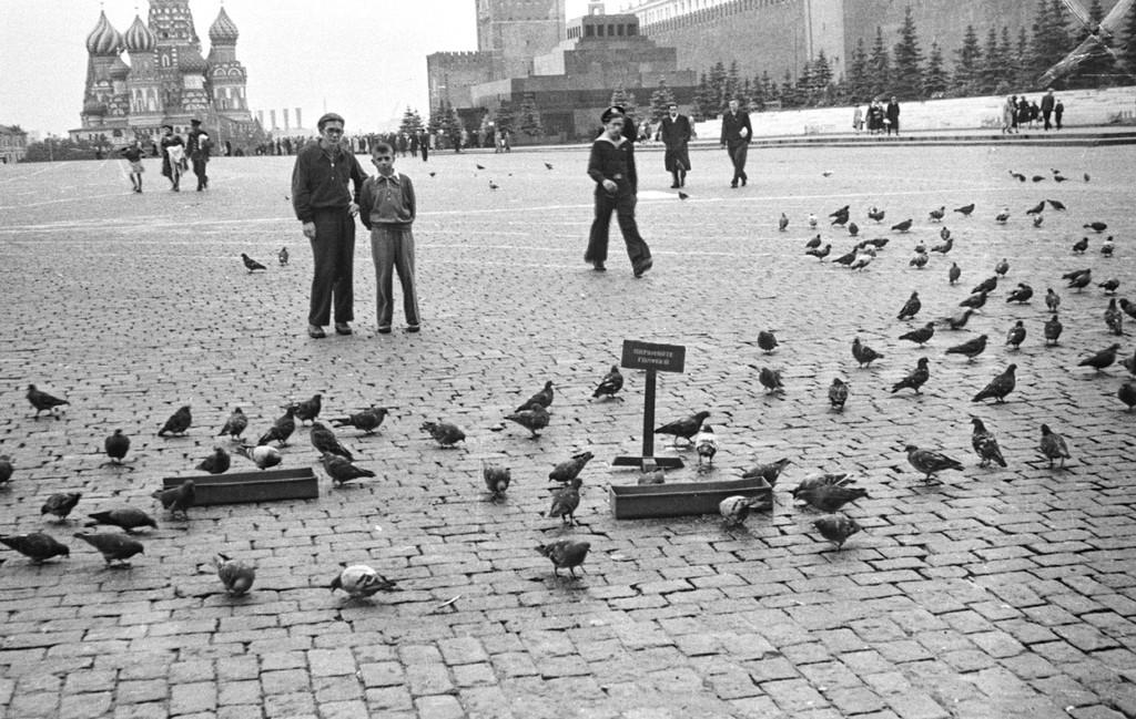 335465 Красная площадь 60 Булдаков С.Д, Охраняйте голубей!.jpg