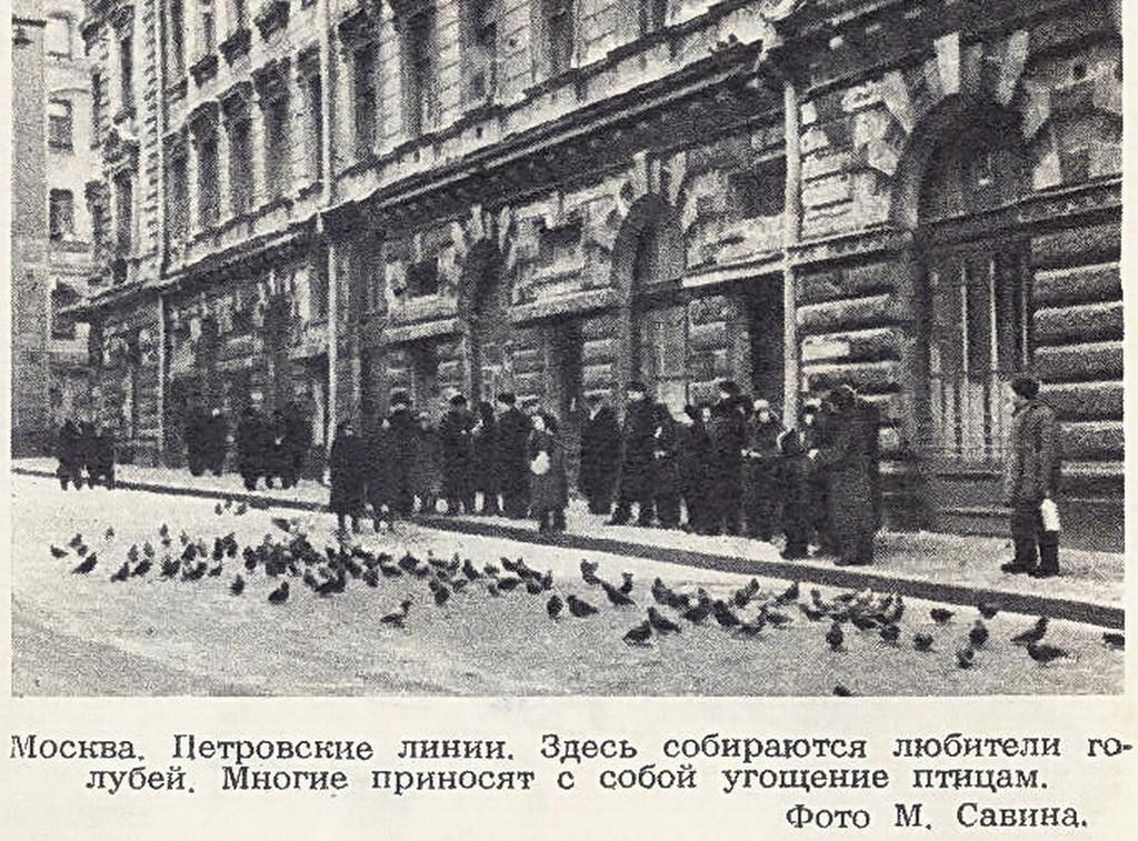 104593 Любители голубей на Петровских линиях 54 М. Савин.jpg