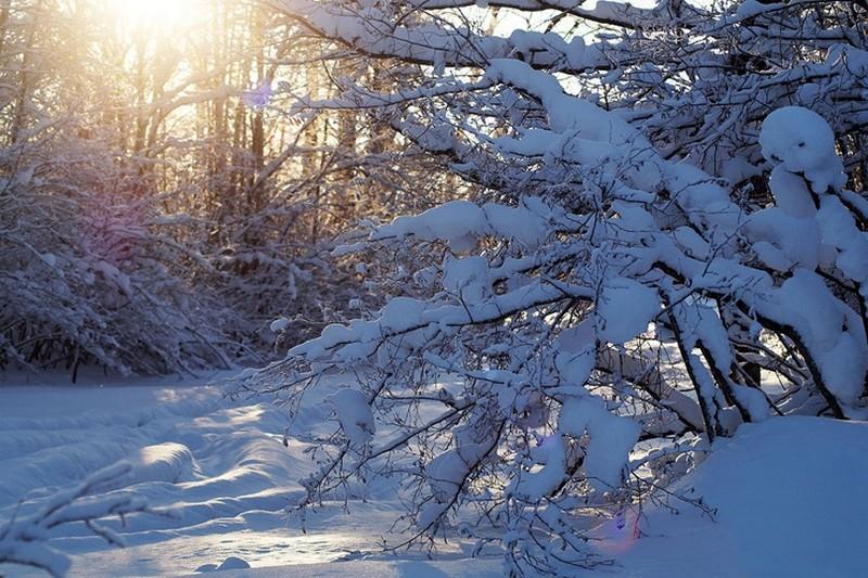 Важные зимние дела