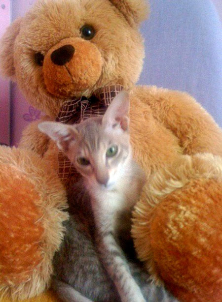 Дульсинея - кошка Тины Канделаки