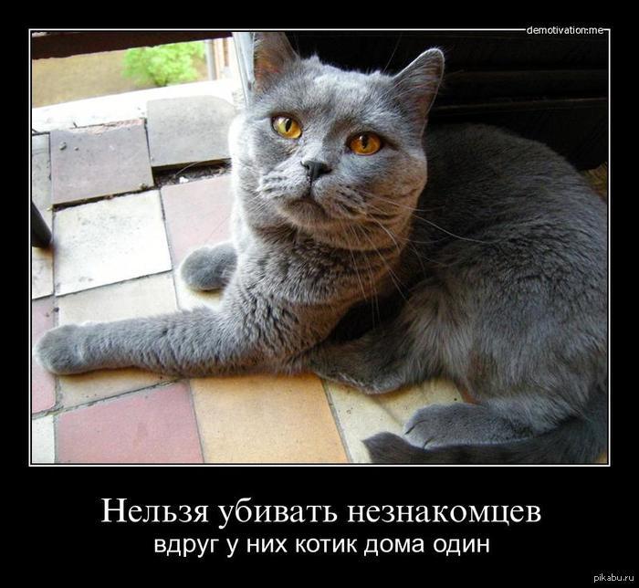 cat-killer