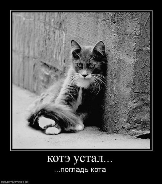 437446_kote-ustal