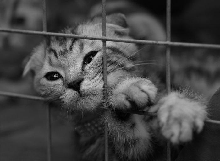 sad_cat_18