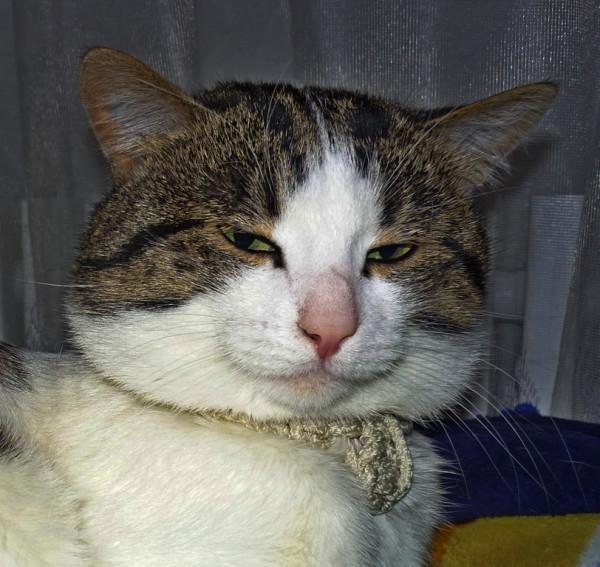Psi_cat